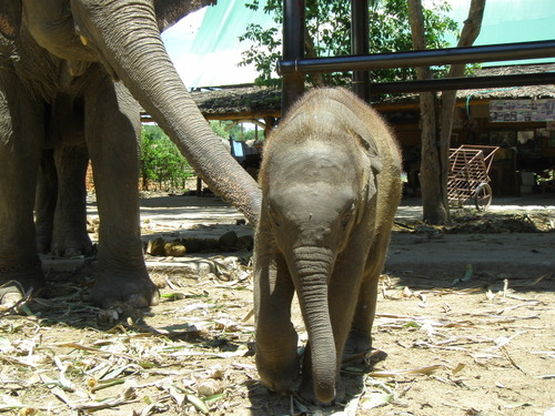 Elephantstay_039