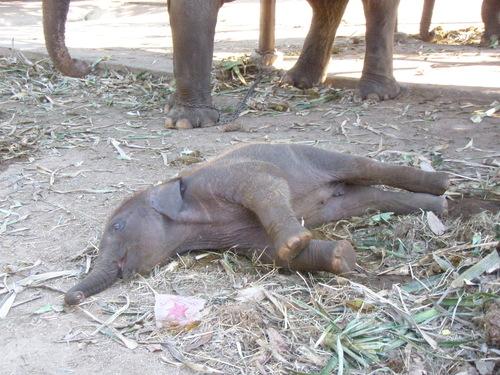 Elephantstay_086