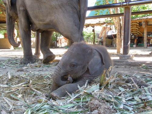 Elephantstay_089