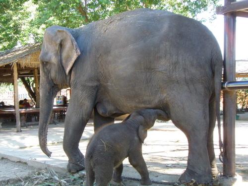 Elephantstay_098