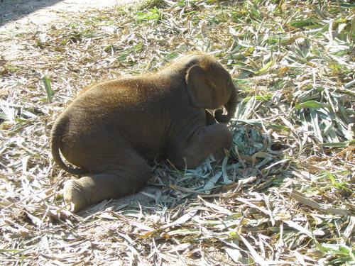 Elephantstay_099