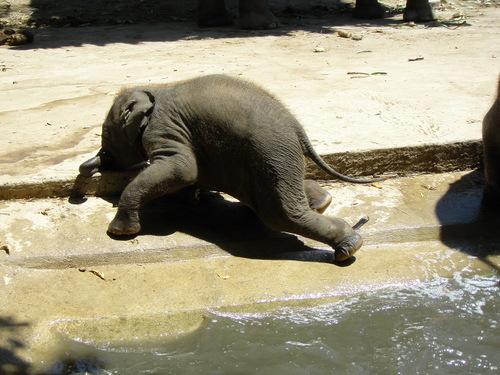 Elephantstay_139