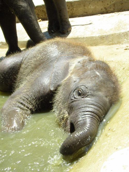 Elephantstay_266