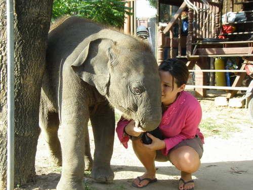 Elephantstay_285