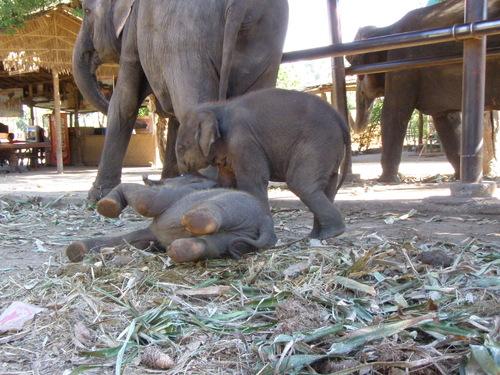 Elephantstay_090
