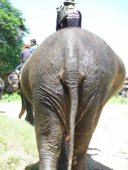 Elephantstay_167