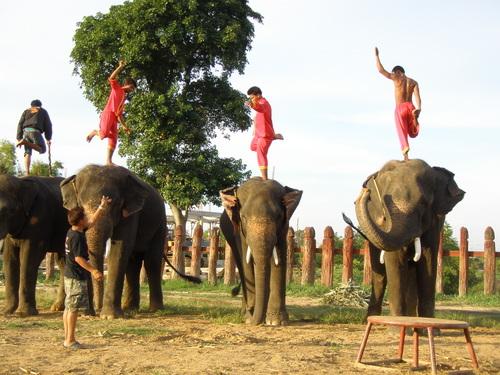 Elephantstay_204