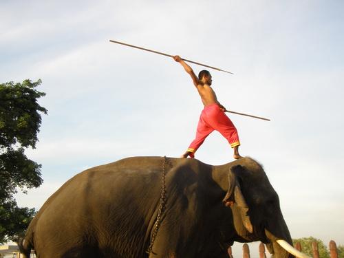 Elephantstay_225