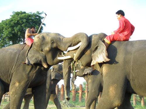 Elephantstay_228_2