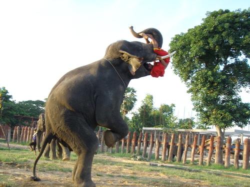 Elephantstay_235