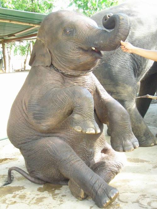 Elephantstay_282